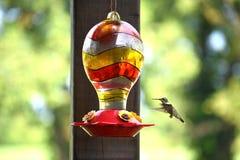 Kolibri som flyger till nektarförlagemataren Arkivfoton