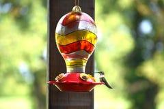 Kolibri som sätta sig på nektarförlagematare Fotografering för Bildbyråer