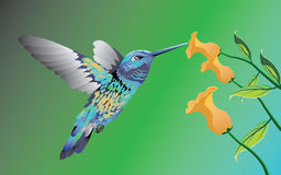 kolibrie royalty-vrije illustratie