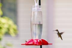 Kolibrie & Bij Royalty-vrije Stock Afbeeldingen