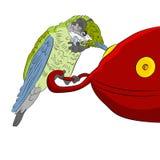 Kolibrie bij Voeder Royalty-vrije Stock Afbeelding