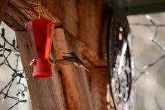Kolibrie die aan voeder vliegen Stock Afbeelding