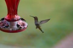 Kolibrie die dichtbij een voeder hangen stock foto's