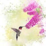 Kolibrie en Vlinderstruikwaterverf Stock Afbeeldingen