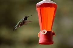 Kolibrie en voeder Royalty-vrije Stock Afbeelding