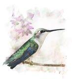 Kolibrie het Neerstrijken royalty-vrije illustratie