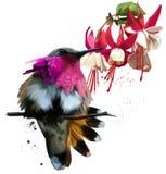 Kolibrier och röd blommavattenfärgteckning Royaltyfria Bilder