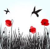 Kolibries en papaversbloemen Royalty-vrije Stock Afbeeldingen