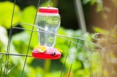 Kolibriförlagematare med getingen Royaltyfri Foto