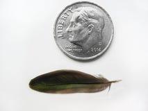 Kolibrifjäder med myntjämförelse arkivfoto