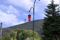Kolibrifliegen in Richtung zur Zufuhr Stockbilder