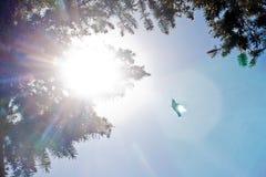 Kolibriflyg in i solen/signalljuset Royaltyfri Fotografi