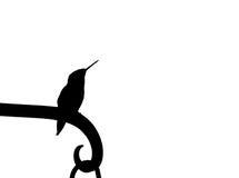 Kolibrikontur arkivbild