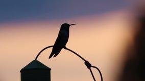 Kolibrikontur som ut klibbar solnedgång för tunga arkivfilmer