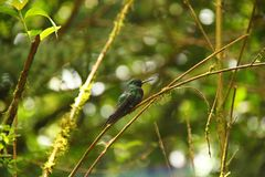 Kolibrimöte royaltyfria bilder