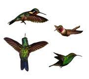Kolibris getrennt über weißem Hintergrund mit P Lizenzfreies Stockbild