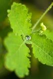 kolii łzy Fotografia Stock