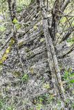 Kollapsat staket mellan buskebuskar royaltyfria bilder