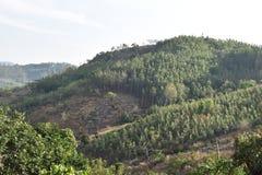 Kolli wzgórza zdjęcie stock