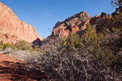 Kolob Canyon Cliffs in the winter. With bare trees and red sandstone Royalty Free Stock Photo