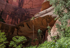 Kolob kanjon Zion National Park 16 Royaltyfri Bild