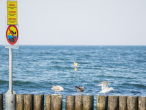 Kolobrzeg beach breakwater Stock Image