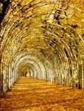 Autumn alley of hornbeams in Kolobrzeg, binding, Poland. royalty free stock photo