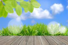 Ökologiekonzept, neues grünes Feld und blauer Himmel Stockbilder