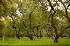 Kolomenskaya公园 免版税库存图片