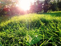 Kolomenskoe公园 免版税库存照片