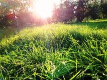 Kolomenskoe-Park Lizenzfreie Stockfotos