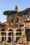 kolommen en bomen in Romein royalty-vrije stock fotografie