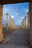 Kolommen in Jerash stock afbeeldingen