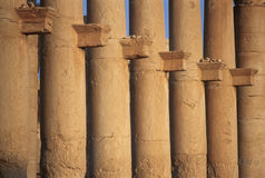 Kolommen van de Grote Colonnade, Palmyra, Syrië Stock Fotografie