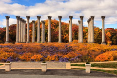 Kolommen van het Washington DC de Nationale Capitool in de Herfst royalty-vrije stock afbeeldingen