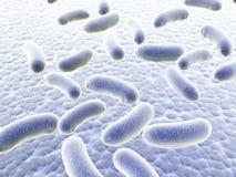 Koloni av bakterier