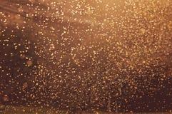 Koloni av myggor Arkivfoto