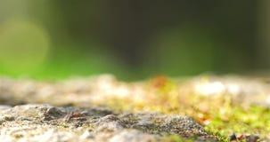 Koloni av myror som går på jordning