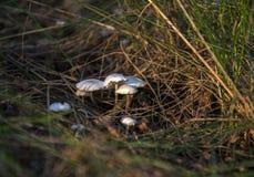 Koloni av svampar Royaltyfria Foton