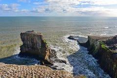 Kolonia gannets przy Muriwai plażą Obraz Stock