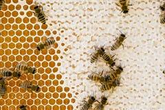 Kolonia Miodowe pszczoły zdjęcia stock