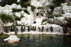 kolonia pingwin Fotografia Stock
