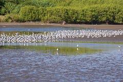Kolonie der Seemöwen stockbild