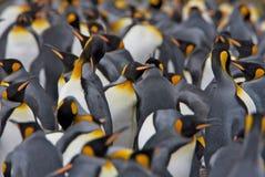 Kolonie des Königs Penguins stockbilder