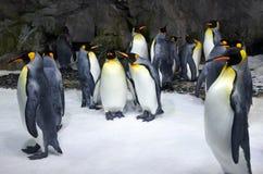 Kolonie Königs Penguin stockfoto
