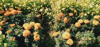 Kolonie van bloemen royalty-vrije stock foto's