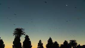 Kolonie van fruitknuppels die in hemel vliegen stock video