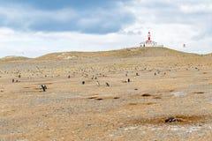 Kolonie van magellanic pinguïnen op het eiland van Magdalena, Straat van Magellan, Chili royalty-vrije stock afbeeldingen