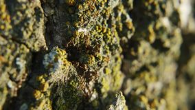 Kolonie van mierenclose-up stock video