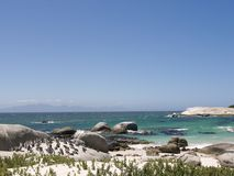 Kolonie van Pinguïnen bij Keienstrand, Cape Town, Zuid-Afrika royalty-vrije stock foto's